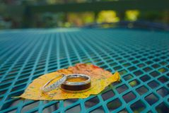 Αγάπη και γάμος σε ένα φύλλο στη φύση στοκ εικόνες