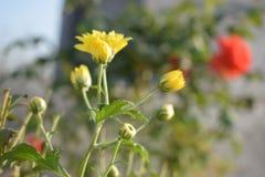 Αγάπη λουλουδιών στοκ φωτογραφία με δικαίωμα ελεύθερης χρήσης