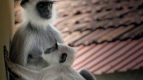 Αγάπη μητέρων Στοκ Εικόνες