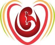 αγάπη νεφρών Στοκ εικόνα με δικαίωμα ελεύθερης χρήσης
