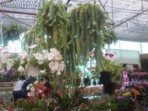 Αγάπη & λουλούδι Στοκ εικόνες με δικαίωμα ελεύθερης χρήσης