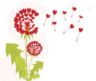 αγάπη πικραλίδων Στοκ εικόνα με δικαίωμα ελεύθερης χρήσης