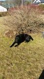 αγάπη σκυλιών μου Στοκ Εικόνες