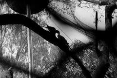 Αγάπη στην αιχμαλωσία Στοκ Εικόνες