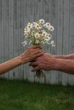 Αγάπη της Daisy Στοκ φωτογραφίες με δικαίωμα ελεύθερης χρήσης