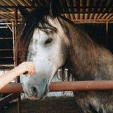 Αγάπη του αλόγου στοκ εικόνα