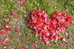 Αγάπη φθινοπώρου στοκ εικόνες με δικαίωμα ελεύθερης χρήσης