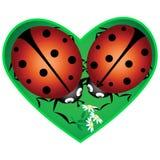 Αγάπη ladybugs Στοκ φωτογραφία με δικαίωμα ελεύθερης χρήσης