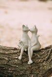 Αγάλματα των γατών φιλήματος που κάθονται σε ένα δέντρο κούτσουρων Στοκ Εικόνες