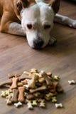 αγαθό σκυλιών Στοκ φωτογραφίες με δικαίωμα ελεύθερης χρήσης