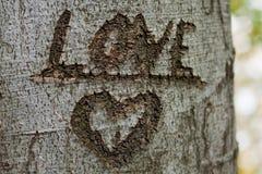 αγαπήστε το δέντρο Στοκ Φωτογραφία