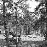 αγαπητός Στοκ φωτογραφίες με δικαίωμα ελεύθερης χρήσης
