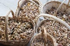 Αγαρικό μελιού μανιταριών στα καλάθια Στοκ φωτογραφία με δικαίωμα ελεύθερης χρήσης