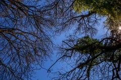 Αγγίξτε τα δέντρα στοκ φωτογραφίες