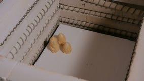 Αγγειοπλάστης που τοποθετεί τα κεραμικά ειδώλια στον κλίβανο αγγειοπλαστικής φιλμ μικρού μήκους