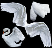 αγγελικά φτερά Στοκ Εικόνες