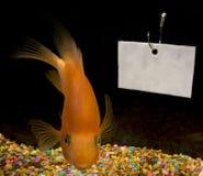 Αγγελία ψαριών Στοκ Φωτογραφίες