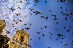 Αγγελικά πουλιά Στοκ φωτογραφίες με δικαίωμα ελεύθερης χρήσης
