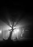 Αγγελικοί κλάδοι Στοκ φωτογραφία με δικαίωμα ελεύθερης χρήσης