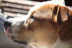Αγγελικό σκυλί Στοκ φωτογραφία με δικαίωμα ελεύθερης χρήσης