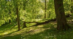 αγγλικά δάση στοκ φωτογραφίες