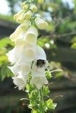 αγγλικός κήπος λουλουδιών χωρών στοκ εικόνα