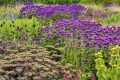 αγγλικός κήπος λουλο&upsi Στοκ φωτογραφία με δικαίωμα ελεύθερης χρήσης
