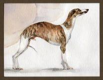 Αγγλικό greyhound Whippet που χρωματίζεται στο watercolor στο σχεδιάγραμμα στοκ φωτογραφία