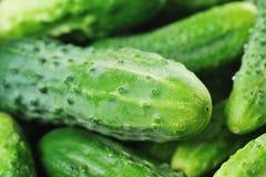 αγγούρια πράσινα Στοκ φωτογραφία με δικαίωμα ελεύθερης χρήσης