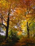 Αγγλική δασώδης περιοχή που παρουσιάζει χρώματα φθινοπώρου Στοκ Φωτογραφίες