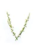 Αγγλική επιστολή Β στο αλφάβητο των κουδουνιών λουλουδιών Εγγραφή καλλιγραφίας στοκ φωτογραφία