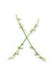 Αγγλική επιστολή Χ στο αλφάβητο των κουδουνιών λουλουδιών Εγγραφή καλλιγραφίας στοκ φωτογραφίες με δικαίωμα ελεύθερης χρήσης