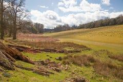 Αγγλική φύση Πάρκο στο χρόνο άνοιξη του Σάσσεξ Στοκ φωτογραφία με δικαίωμα ελεύθερης χρήσης