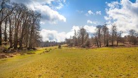 Αγγλική φύση Πάρκο στο χρόνο άνοιξη του Σάσσεξ Στοκ Φωτογραφία
