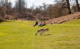 Αγγλική φύση Πάρκο στο χρόνο άνοιξη του Σάσσεξ Στοκ Φωτογραφίες