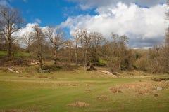 Αγγλικοί τοπίο, δάσος και τομείς την άνοιξη Σάσσεξ Στοκ Εικόνα