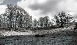 Αγγλικοί τοπίο, δάσος και τομείς την άνοιξη Σάσσεξ Στοκ φωτογραφία με δικαίωμα ελεύθερης χρήσης