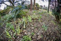Αγγλικός κήπος την άνοιξη Στοκ φωτογραφία με δικαίωμα ελεύθερης χρήσης