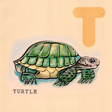 Αγγλικό αλφάβητο, χελώνα Στοκ Εικόνες