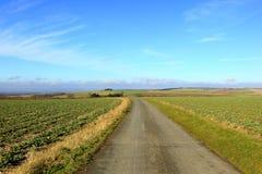 Αγγλικό καλλιεργήσιμο έδαφος με τους τομείς αγροτικής διαδρομής και συναπόσπορων Στοκ Φωτογραφίες