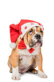 Αγγλικό κουτάβι μπουλντόγκ με το καπέλο Χριστουγέννων Στοκ Εικόνες