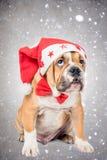 Αγγλικό κουτάβι μπουλντόγκ με το καπέλο Χριστουγέννων Στοκ φωτογραφία με δικαίωμα ελεύθερης χρήσης