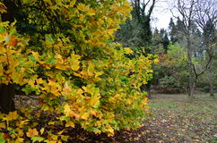 Αγγλικό φθινόπωρο Στοκ φωτογραφίες με δικαίωμα ελεύθερης χρήσης