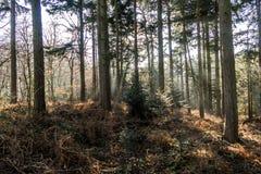 Αγγλικό φυσικό τοπίο το πρωί σε Felbrigg, Norfolk στοκ φωτογραφίες