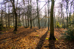 Αγγλικό φυσικό τοπίο το πρωί σε Felbrigg, Norfolk Στοκ εικόνες με δικαίωμα ελεύθερης χρήσης