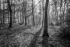Αγγλικό φυσικό τοπίο το πρωί σε Felbrigg, Norfolk Στοκ Εικόνες