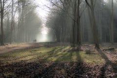 Αγγλικό φυσικό τοπίο το πρωί σε Felbrigg, Norfolk Στοκ φωτογραφίες με δικαίωμα ελεύθερης χρήσης