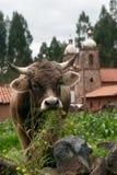 αγελάδα που τρώει τη χλόη Στοκ Εικόνα