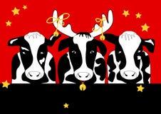 αγελάδα Χριστουγέννων Στοκ Εικόνες