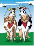 αγελάδες δύο Στοκ Φωτογραφίες